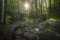 Deutschland, mecklenburg-vorpommern, ruegen, jasmund nationalpark, buchenwald — Stockfoto