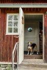 Chien debout à la porte ouverte dans la maison de vacances regardant à l'extérieur — Photo de stock