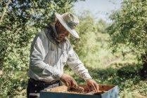 Russie, cadre de contrôle apiculteur avec abeilles domestiques — Photo de stock