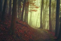 Autumn forest and empty forest path — Foto stock