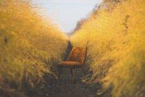 Chaise orange dans le domaine d'asperges en automne — Photo de stock