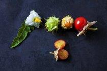 Tomates, hojas y flores pegajosas en el suelo oscuro - foto de stock