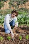 Человек сажает салаты в огороде — стоковое фото