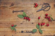 Rosen und Schere auf Holzhintergrund — Stockfoto