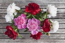 Mazzo di Peonie bianche, rosse e rosa — Foto stock