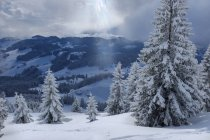 Germania, Baviera, Chiemgau, Alpi Chiemgau, Sachrang, Spitzstein in inverno — Foto stock