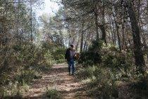 Hombre mayor que busca setas en el bosque - foto de stock