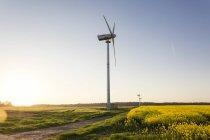 Alemanha, Ruegen, Cabo Arkona, rodas de vento no campo de estupro — Fotografia de Stock