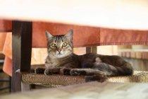 Кот лежит на стуле под столом — стоковое фото