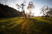 Allemagne, prairie automnale avec arbres fruitiers épars au crépuscule — Photo de stock