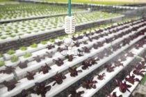 Aspersor em vegetais de pulverização de estufa — Fotografia de Stock