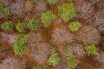 Alemania, Baden-Wuerttemberg, Bosque de Suabia, Vista aérea del bosque en otoño - foto de stock