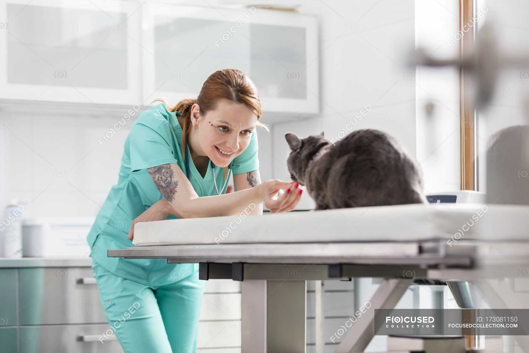 Veterinarian Assistant With Cat In Veterinary Clinic Stock Photo