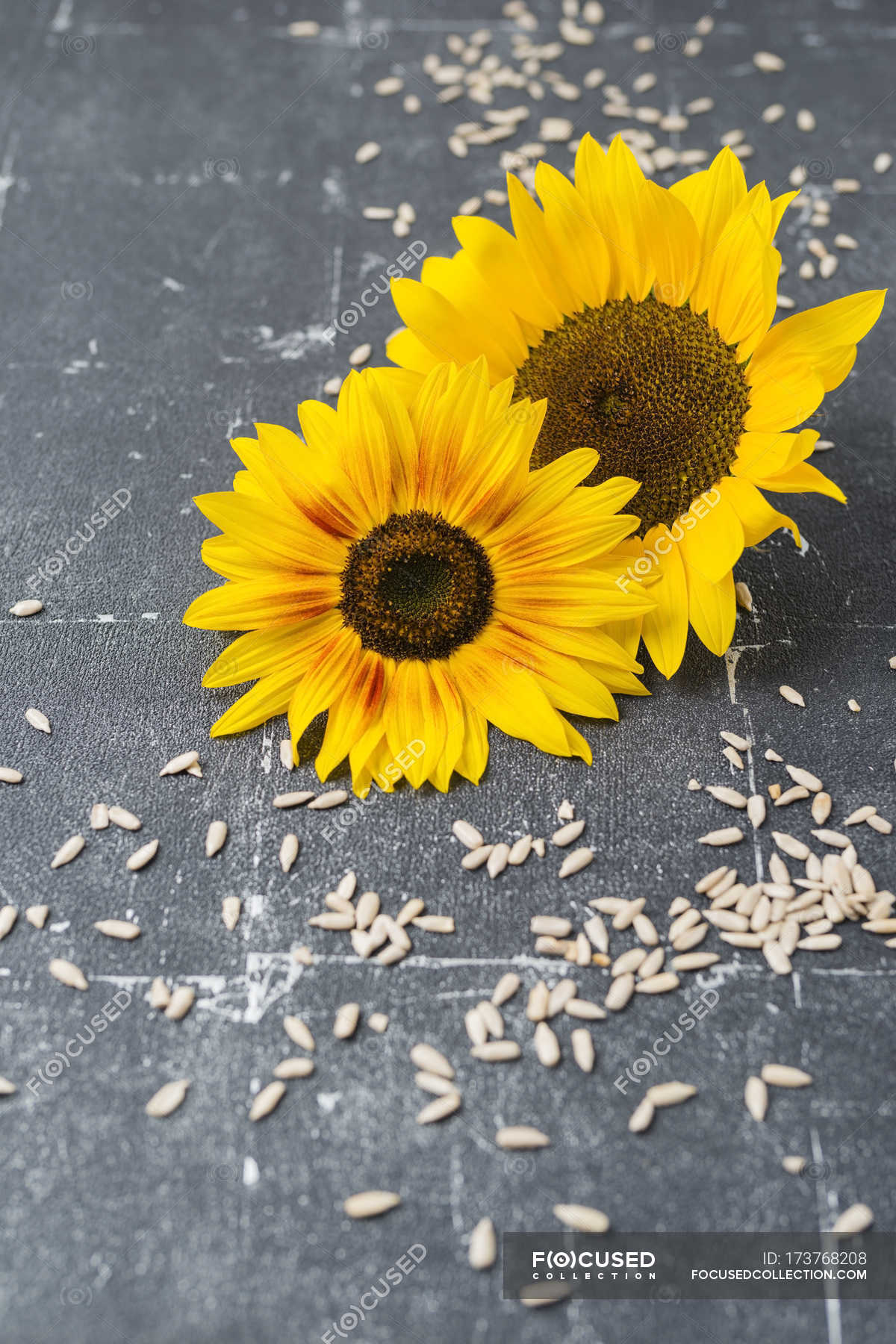 Tered Sunflower Seeds