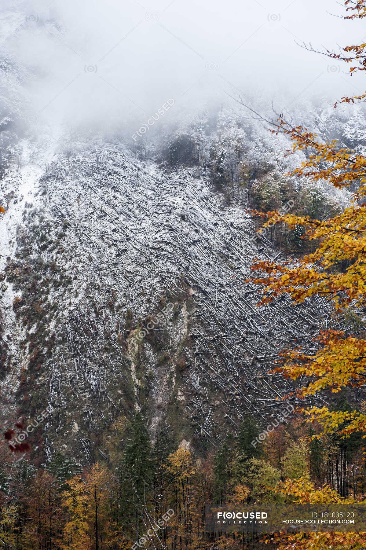 Austria Salzburg State Hallstatt Trees After A Windfall Color