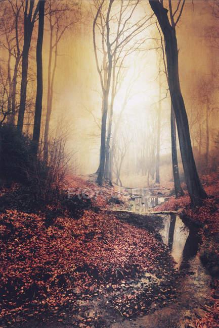 Восход солнца в осеннем лесу с Брук — стоковое фото