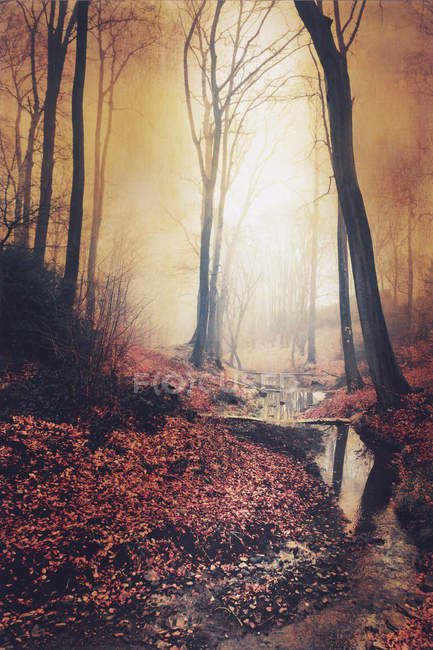 Sunrise in autumn forest with brook — Stock Photo