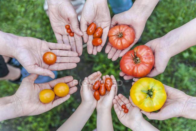 Люди Холдинг помидоры — стоковое фото
