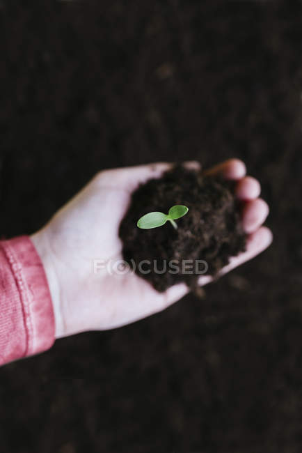 Hand holding sprout — Stock Photo