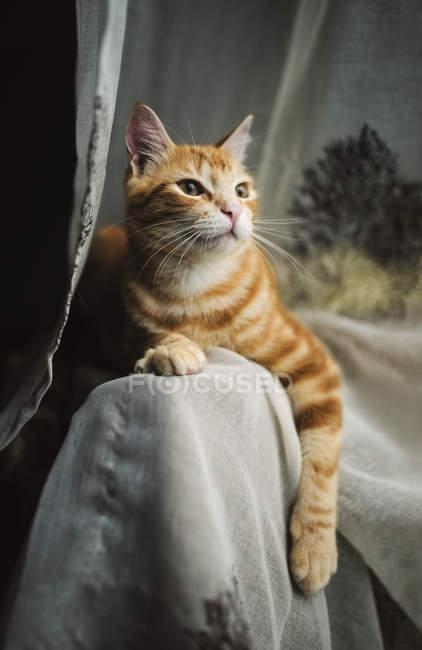 Tabby cat on the backrest — Stock Photo
