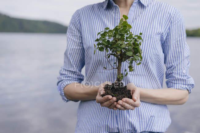Donna che tiene piccolo albero in mano — Foto stock