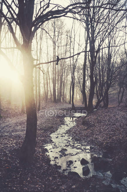 Sunrise in winter forest — Stock Photo