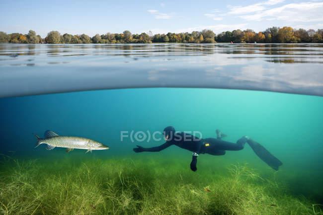 Taucher und Hechte in einem See — Stockfoto