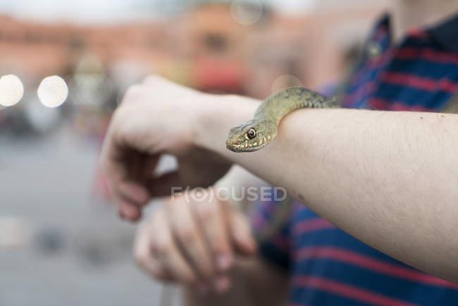 Snake on tourist's arm — Stock Photo