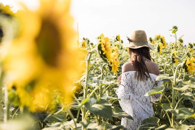 Жінка вигулює соняшникова поля — стокове фото