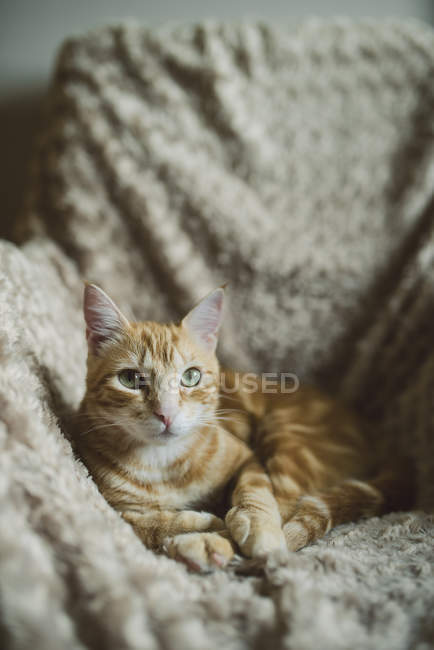 Ginger cat lying on armchair — Stock Photo