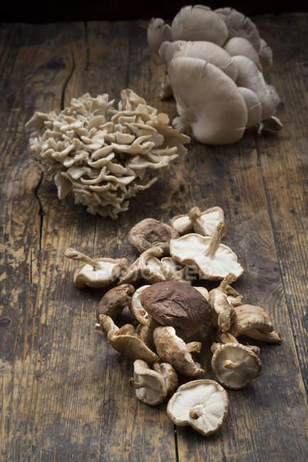 Maitake mit Shiitake und Austernpilze — Stockfoto