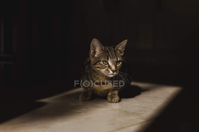 Kitten sitting at floor — Stock Photo