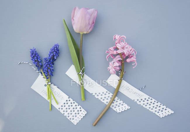 Grape hyacinth, hyacinth and tulip — Stock Photo