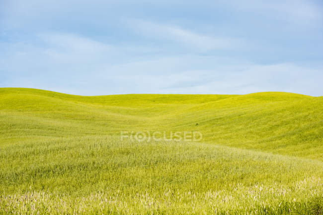 Field landscape, Tuscany — Stock Photo