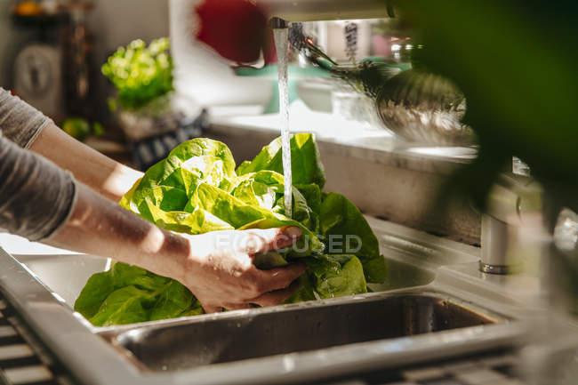 Female hands Washing lettuce — Stock Photo