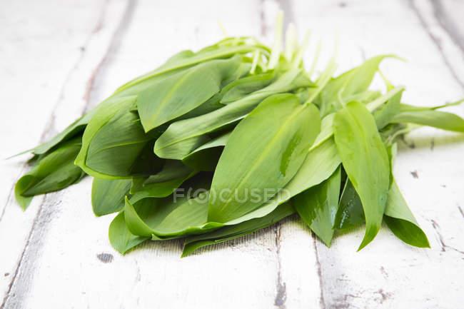 Fresh green Ramson leaves — Stock Photo