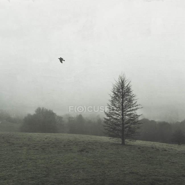 Bird flying in the sky — Stock Photo