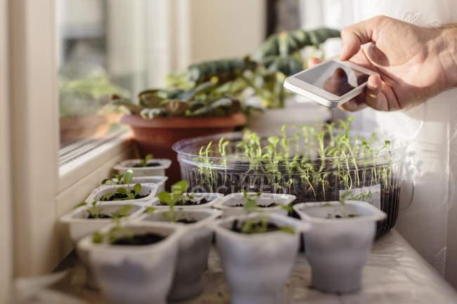Junger Mann macht Handy-Foto von Pflanzen am Fenster — Stockfoto