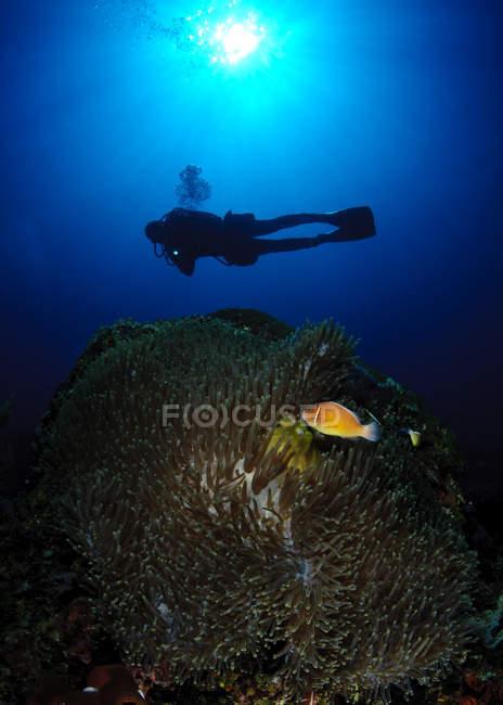 Diver swimming in the sea — Stock Photo