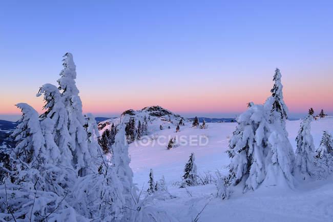 Bavarois forêt en hiver — Photo de stock