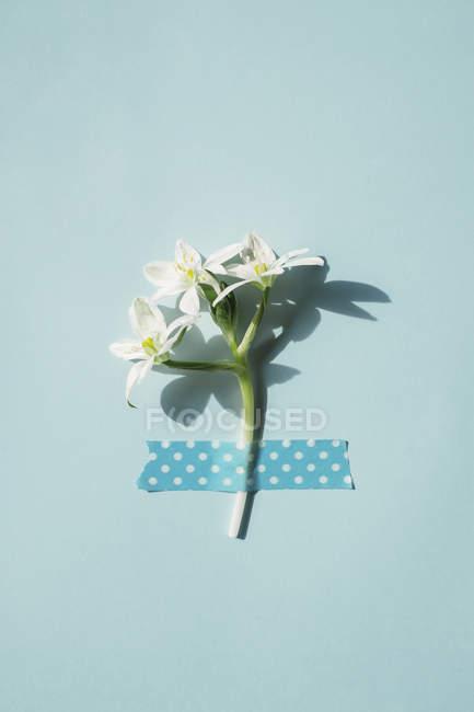 Flor de primavera fija con cinta - foto de stock
