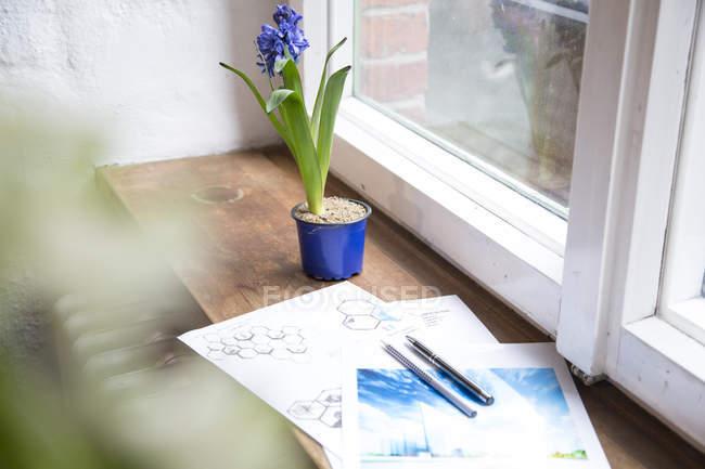 Draft and flower on windowsill — Stock Photo