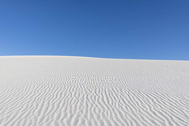 Chihuahua Desert dune — Stock Photo