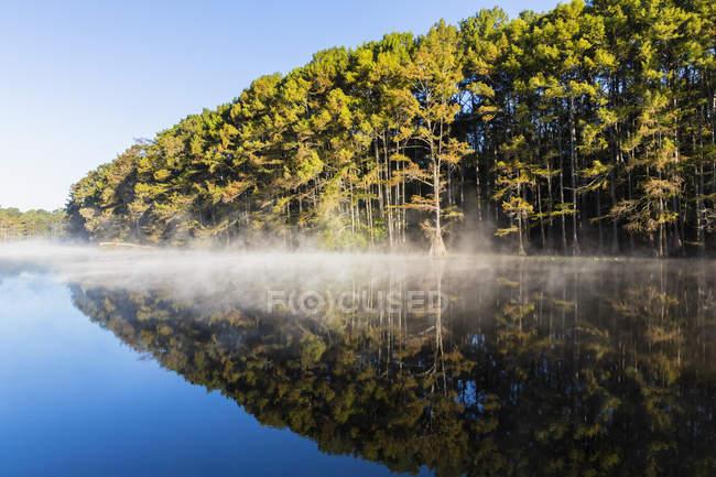Ліс кипариса Білоголовий — стокове фото