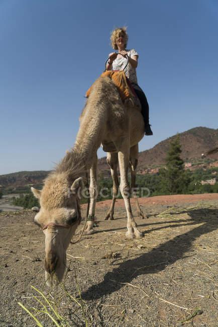 Frau reitet auf einem Kamel — Stockfoto