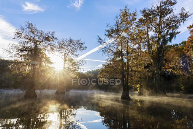 Bald cypress forest — Stock Photo