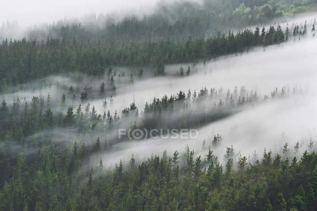 Мряка у лісі Oiz — стокове фото