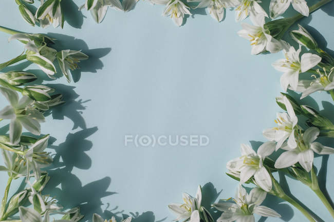 Round composition of white flowers — Stock Photo