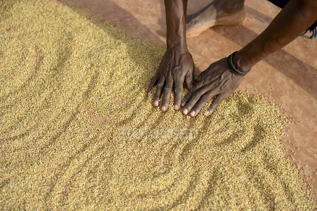 Burkina Faso, village Koungo, woman spreading out sorghum grains to dry in the sunshine — Stock Photo