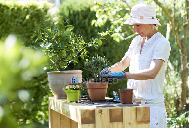 Woman potting oleander — Stock Photo
